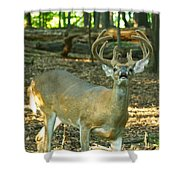 Vocal 10 Point 9544 4378 Shower Curtain