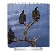 Vultures Perched On A Branch No.0022 Shower Curtain