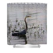 Wading Blue Heron - Ardea Herodias Shower Curtain
