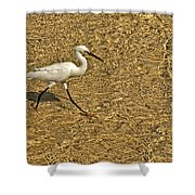 Wading For A Meal Shower Curtain