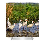 Wading Ibises Shower Curtain
