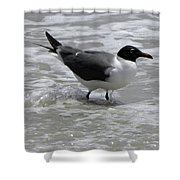 Wading Shower Curtain