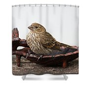 Waiting For Food Shower Curtain