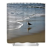 Waiting For Lunch On Shore Shower Curtain