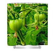 Waiting For The Harvest Shower Curtain