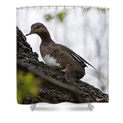 Waiting Out The Rain Shower Curtain