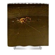 Waiting Spider Shower Curtain