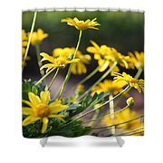 Waking Up To Sunshine Shower Curtain