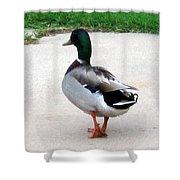 Walking Duck Shower Curtain