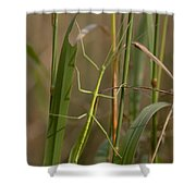 Walking Stick Insect Shower Curtain