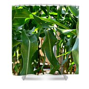 Walking Through The Cornfields Shower Curtain