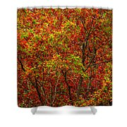 Wall Of Red Shower Curtain by Ed Smith