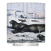 Walruses On Ice Field Shower Curtain