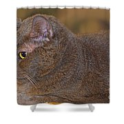 Warm Kitty  Shower Curtain