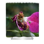 Warrior Rose Shower Curtain