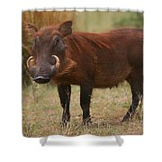 Warthog Shower Curtain
