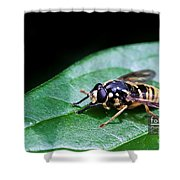 Wasp Break Shower Curtain
