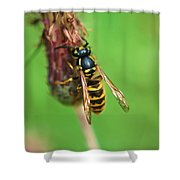 Wasp On Plant Shower Curtain