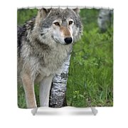 Watchful Eyes Shower Curtain