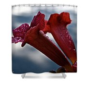 Water Beaded Trumpets Shower Curtain