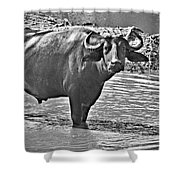 Water Buffalo In Black And White Shower Curtain