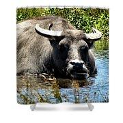 Water Buffalo Shower Curtain