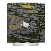 Water Circles On The Lily Pond Shower Curtain