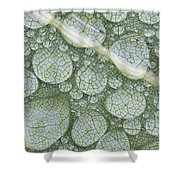 Water Droplets On Leaf, Annapolis Shower Curtain