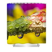 Water Drops On A Budding Flower Shower Curtain