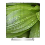 Water Drops On Green Leaf Shower Curtain