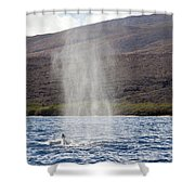 Water From A Whale Blowhole Shower Curtain