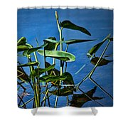 Water Lilies No.098 Shower Curtain