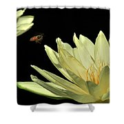 water lily 3 Yellow Water Lily with Bee Shower Curtain
