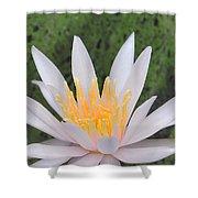 water lily 85 Arc-en-ciel Shower Curtain