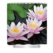 water lily 88 Sunny Pink Water Lily with Reflection Shower Curtain