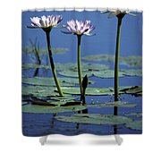 Water Lily Flowers Bloom From A Wetland Shower Curtain