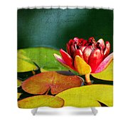 Water Lily II Shower Curtain
