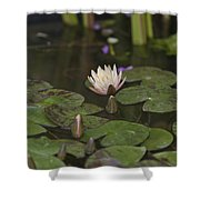 Water-lily Shower Curtain