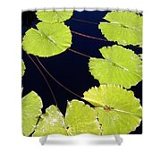 Water Lily Pads And Bloom Shower Curtain