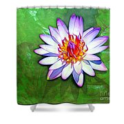 Water Lily Study Shower Curtain