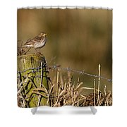 Water Pipit On Post Shower Curtain