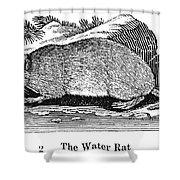 Water Rat Shower Curtain