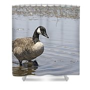 Water Wading Shower Curtain