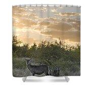 Waterbuck Kobus Ellipsiprymnus Mother Shower Curtain