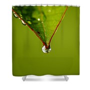 Waterdrop Shower Curtain