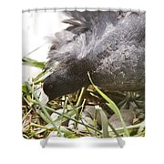Waterhen Coot On Nest With Eggs Shower Curtain