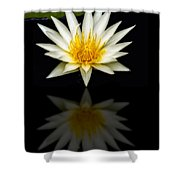 Waterlily And Reflection Shower Curtain