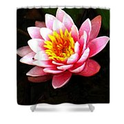 Waterlily On Pond Shower Curtain