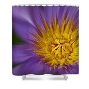 Waterlily Zoom Shower Curtain