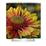 Waterlogged Arizona Apricot Shower Curtain